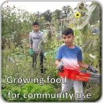 FI Growing food for community use for GM Poverty Action